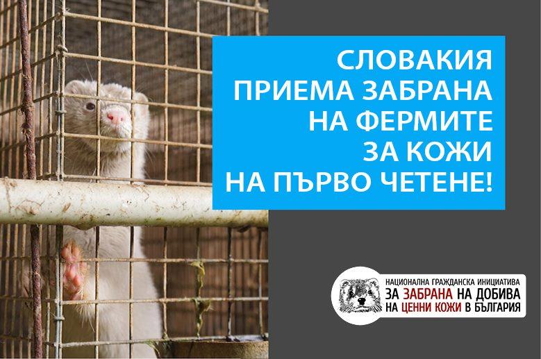 Словакия се насочва към забрана на фермите за ценни кожи