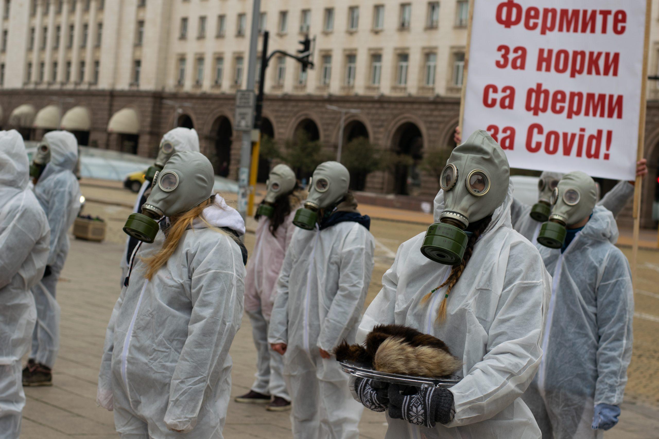 Протест за забрана на фермите за норки заради COVID-19
